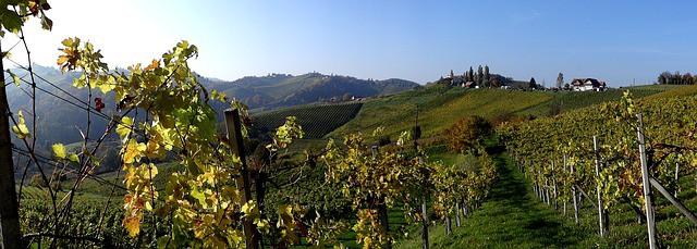 Südsteiermark Firmenverzeichnis Weingebiet